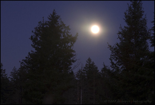 Moonrise ~ Project 365/331