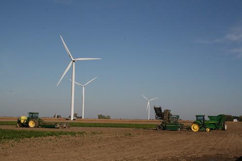 wind_farm_pigeon 002