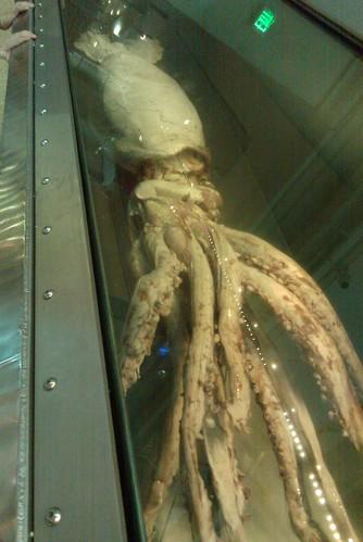 Giant Squid 2