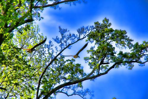 Flight through the Trees