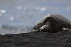 black sand snooze