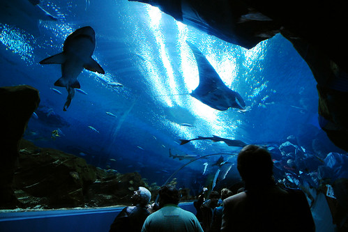Rays + sharks!