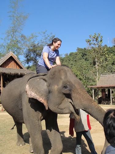 me_elephant2