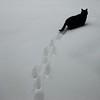 C = Cat (on the road again)