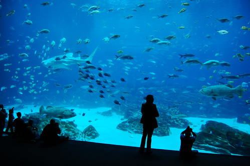The largest fish tank in the world.