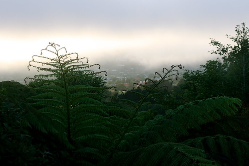 Tuesday: Crazy Fog