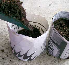 paper_seeding_pot