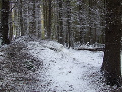 Snow Covered Forrest