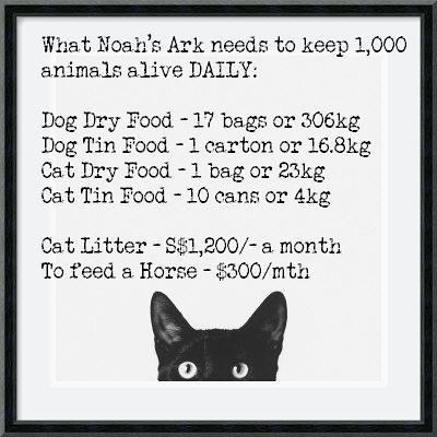 Noahs Ark trivia