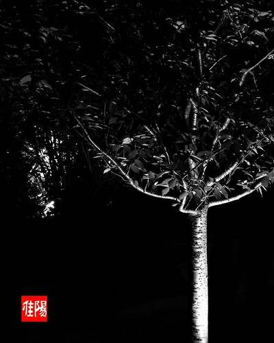 P80-Orf_SpookyTree-01_2009-10_20