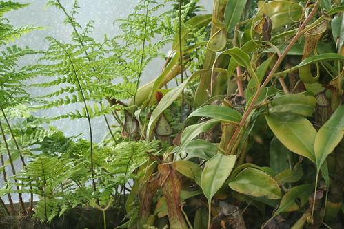 20090919 Edinburgh 20 Royal Botanic Garden 370
