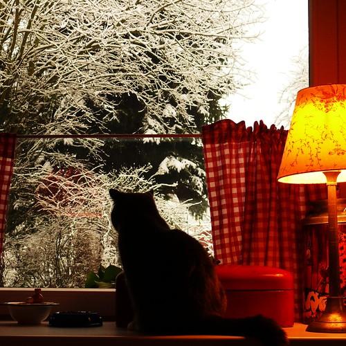 winter cat's morning