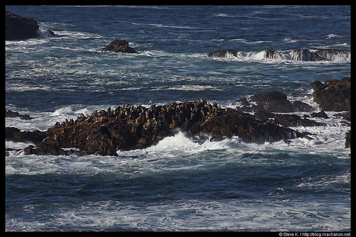 Sea Lion Rock #2