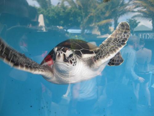 Babby Turtle
