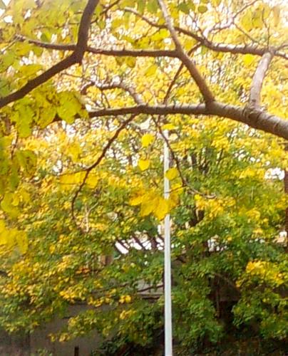 Rainy Day Foliage, Prospect Ave at Seeley St Bridge, Brooklyn, NY, 11/12/2009