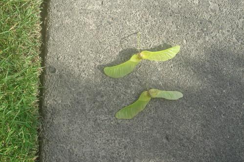 take a walk_像蜻蜓種子1