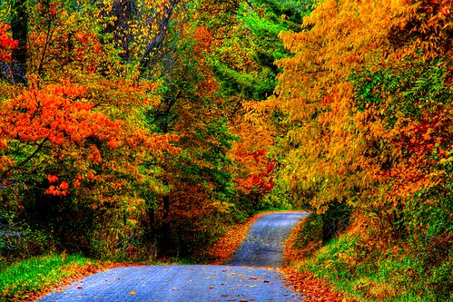 The Rolling Roads of Fall