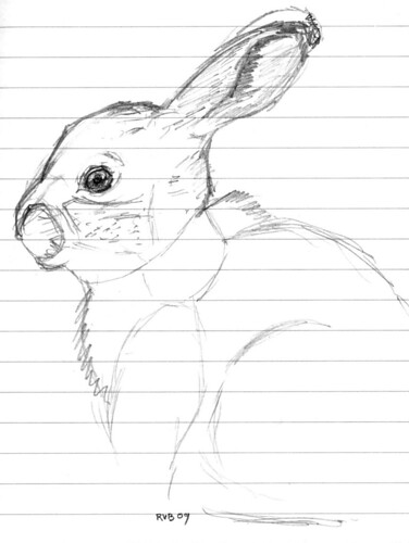 Rabbit in my notebook