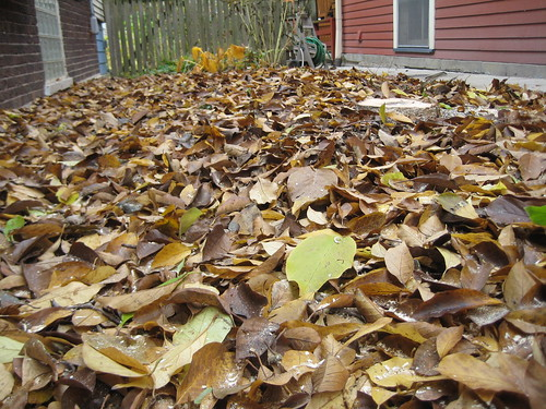 So many leaves...where's the tree?