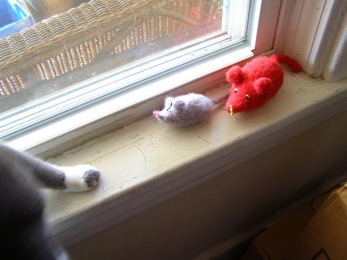 cat follows mouse