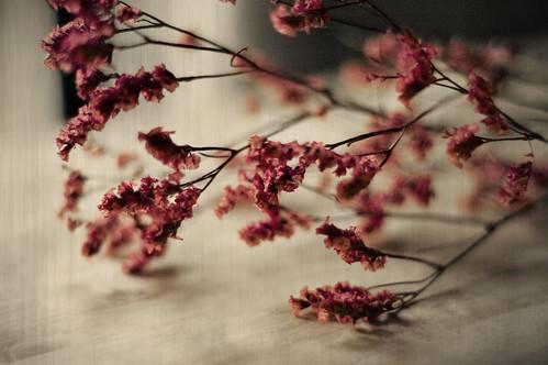 floraldream3