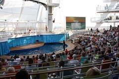 Oasis of the Seas Aqua Theater