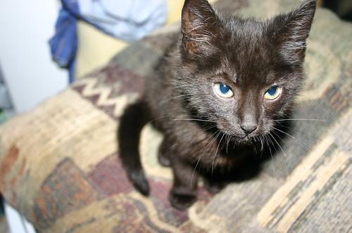 Elizabeth City - Kitten (by Vick)