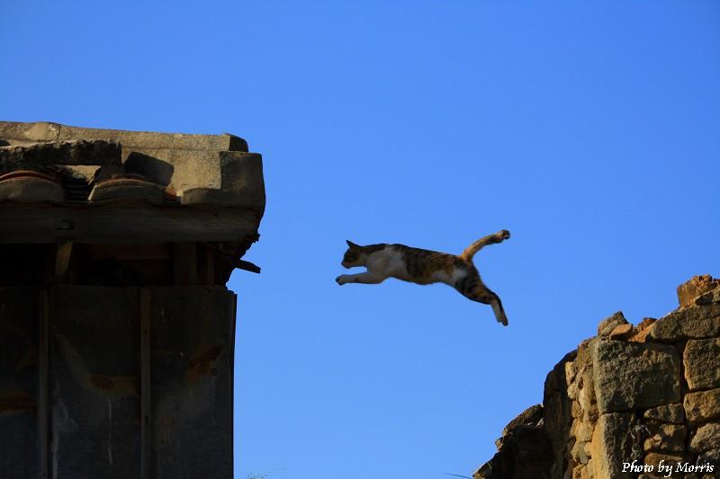 05E 馬祖芹壁有貓