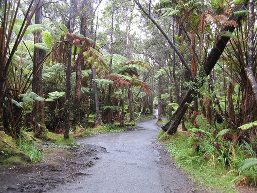 Hawaiian Rainforest