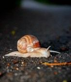 Snail on the road :-)