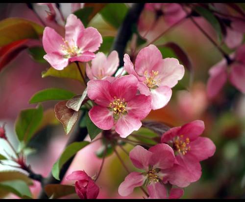 spring in blush