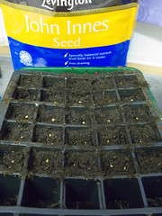 Early seed plantings