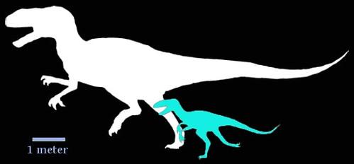 Chilantaisaurus_Fukuiraptor
