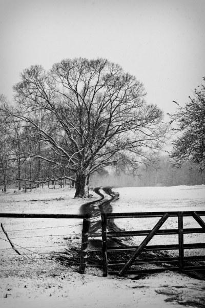 1002_Snow_006-Edit