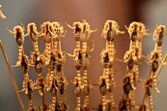 Beijing Snack....Scorpions on a stick