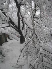 2010 Winter Storm