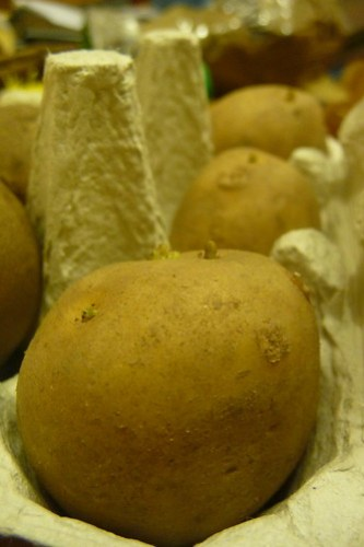 Potatoes for Schools