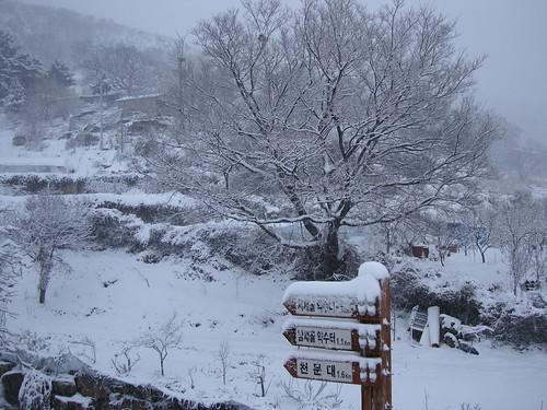 Schnee IV