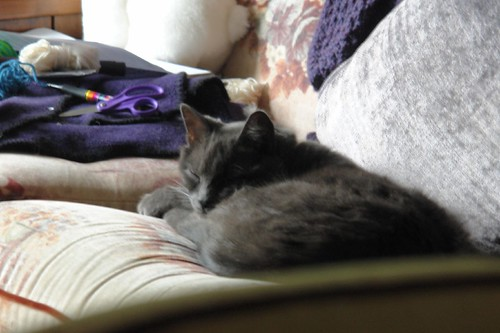 Murphy dozing