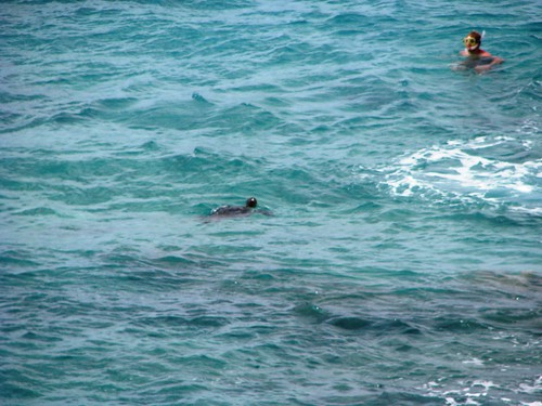 Turtles at Big Beach