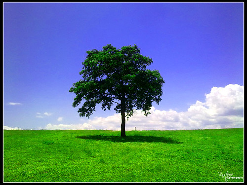 Yalnız ağaç by Bastepe