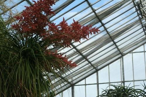 20090919 Edinburgh 20 Royal Botanic Garden 292