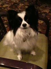 Bella at hotel