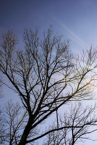 365-86 Tree