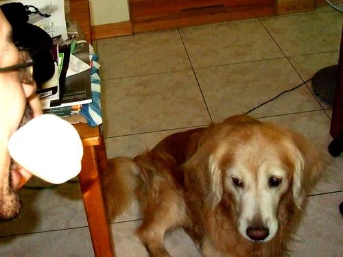 Oreo's 7th birthday