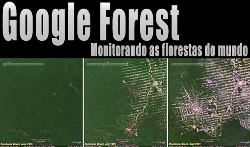 Google Forest