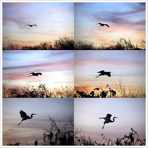 Six Seconds of an Ibis