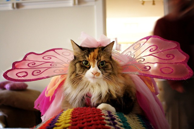 Fairy Feline 2