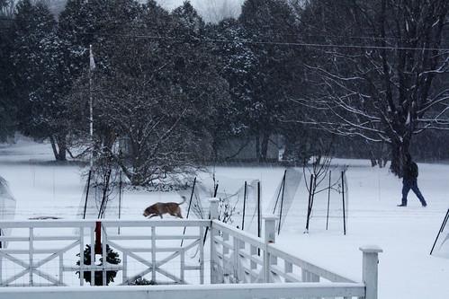 Snowy Homage