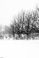 Winterbäume-5